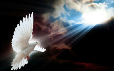 wpid-white-dove-2.jpg